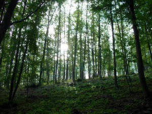 sustainable forest products
